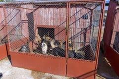 Собаки в укрытии стоковые изображения