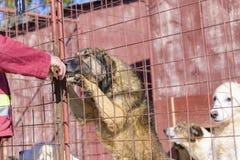 Собаки в укрытии стоковое изображение rf