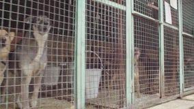 Собаки в aviary в укрытии собаки видеоматериал