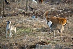 Собаки гнева стоковое фото