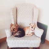 2 собаки деля космос Стоковые Фото