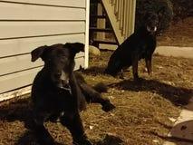 Собаки знают стоковое изображение