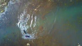 Собаки играя в озере горы сток-видео
