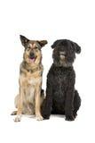 собаки изолировали белизну 2 Стоковое Фото