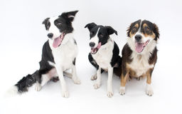 собаки изолировали 3 Стоковое Изображение RF