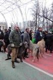 Собаки ирландского wolfhound на торжестве дня ` s St. Patrick в Москве Стоковые Изображения RF