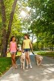 2 собаки и беседы прогулки девочка-подростка Стоковое фото RF