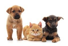 2 собаки и кошки стоковая фотография rf