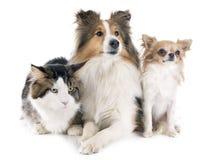 Собаки и кошки Стоковое Фото