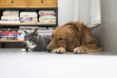 Собаки и кошки snuggle совместно стоковые фото