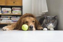 Собаки и кошки snuggle совместно стоковое изображение rf