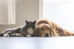 Собаки и кошки snuggle совместно стоковая фотография rf