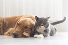 Собаки и кошки snuggle совместно стоковая фотография