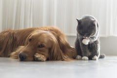 Собаки и кошки snuggle совместно стоковое фото rf