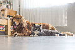 Собаки и кошки snuggle совместно стоковое изображение