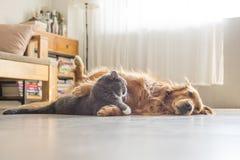 Собаки и кошки snuggle совместно стоковое фото