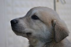Собаки и люди оба очень милые и верные Стоковое Фото