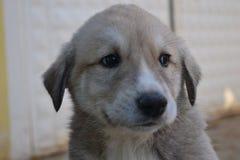 Собаки и люди оба очень милые и верные Стоковые Фотографии RF