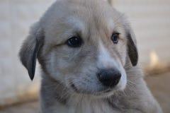 Собаки и люди оба очень милые и верные Стоковое Изображение RF