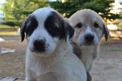 Собаки и люди оба очень милые и верные Стоковое Изображение