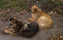 2 собаки лежа на траве, проблемы улицы бездомных собак стоковая фотография
