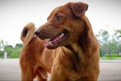 Собаки милые любимцы стоковое изображение