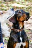 Собаки моды Стоковое Изображение