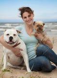 Собаки на море Стоковая Фотография RF