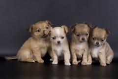 собаки немногая Стоковое Изображение