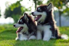 собаки немногая стоковые фотографии rf