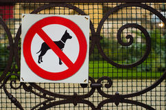 Собаки, нет Стоковая Фотография RF