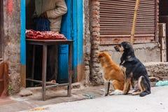 2 собаки перед мясной лавкой, Катманду, Непалом Стоковое Изображение RF