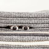 2 собаки под связанным одеялом стоковые изображения rf