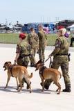 Собаки предохранителя воинские Стоковая Фотография