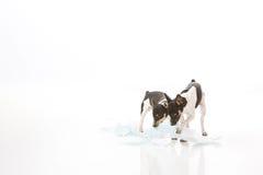 Собаки разрушают небольшую пусковую площадку стоковые фотографии rf