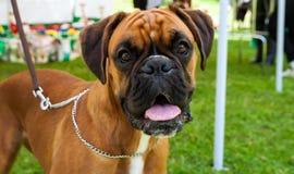 Собаки различных пород Стоковое Изображение RF