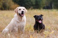 2 собаки различных пород Стоковые Фото