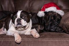 Собаки рождества на кресле стоковые изображения rf