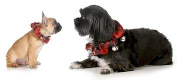 Собаки рождества стоковое фото