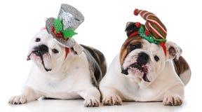 Собаки рождества Стоковое Изображение