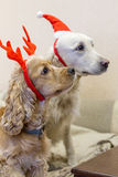 Собаки родословной одетые красиво Стоковое Изображение RF