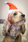 Собаки родословной одетые красиво Стоковые Фотографии RF