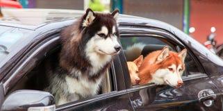 3 собаки, 3 друз Стоковые Фотографии RF