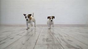2 собаки сидя дома акции видеоматериалы