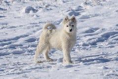 Собаки снега Стоковые Фотографии RF