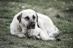 Собаки, собаки, собаки, портрет выслеживают изображения, собак в различных породах, лежа собак, играющ собак, изображения собак с Стоковое Фото