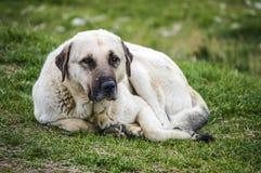 Собаки, собаки, собаки, портрет выслеживают изображения, собак в различных породах, лежа собак, играющ собак, изображения собак с Стоковое фото RF