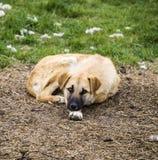 Собаки, собаки, собаки, портрет выслеживают изображения, собак в различных породах, лежа собак, играющ собак, изображения собак с Стоковые Фотографии RF