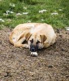 Собаки, собаки, собаки, портрет выслеживают изображения, собак в различных породах, лежа собак, играющ собак, изображения собак с Стоковое Изображение