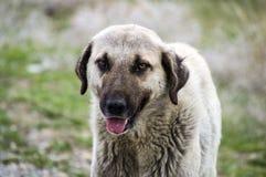 Собаки, собаки, собаки, портрет выслеживают изображения, собак в различных породах, лежа собак, играющ собак, изображения собак с Стоковые Изображения